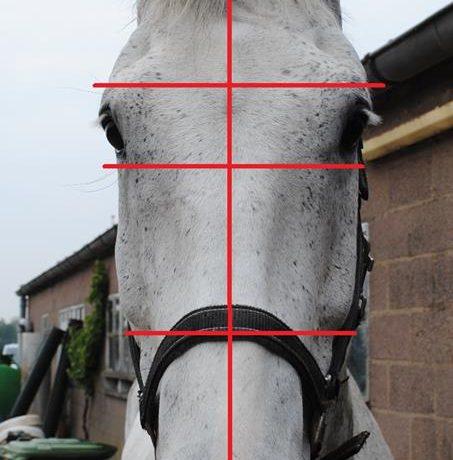 Zeven dingen waaraan je hoofdpijn bij je paard kunt herkennen!