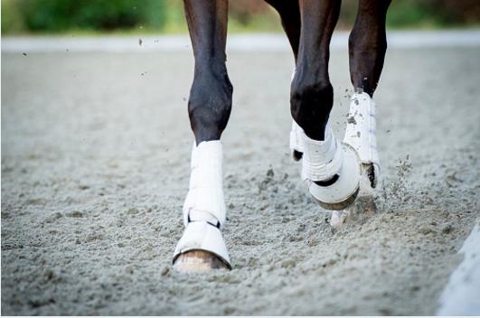 Hoe je kunt ontdekken of jouw paard al in optimale vorm is!