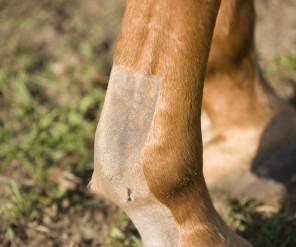 Mijn paard heeft een peesblessure! Wat nu?