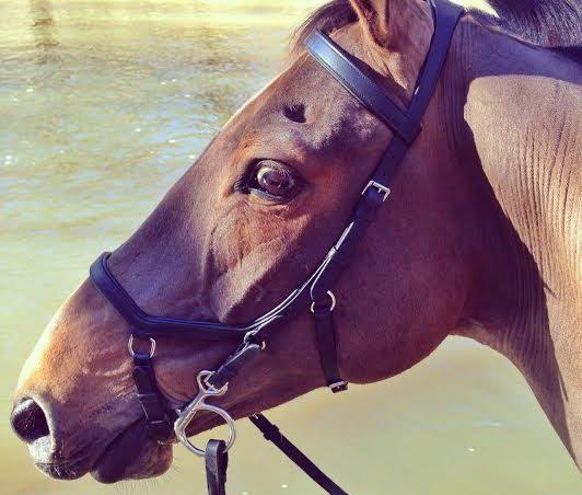 De oorzaak van een gespannen en/of kijkerig paard!