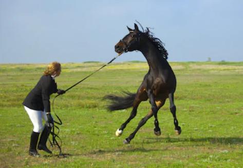 Kan een paard met extreem explosief gedrag wel helemaal fysiek in orde zijn?