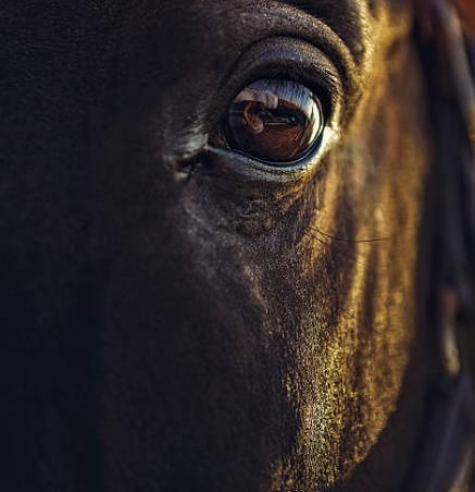 'Een paard is niet gemeen of gevaarlijk geboren!'