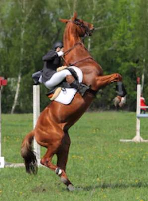 """""""Je paard staat smorgens niet op met het idee 'Vandaag ga ik mijn ruiter eens lekker zand laten happen'."""