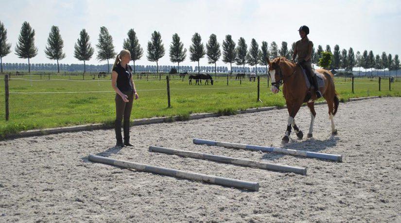 Dit is hoe je kunt leren hoe je jouw paard effectiever kunt gaan trainen.