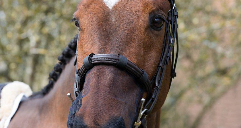 Mijn paard is allergisch voor pollen!