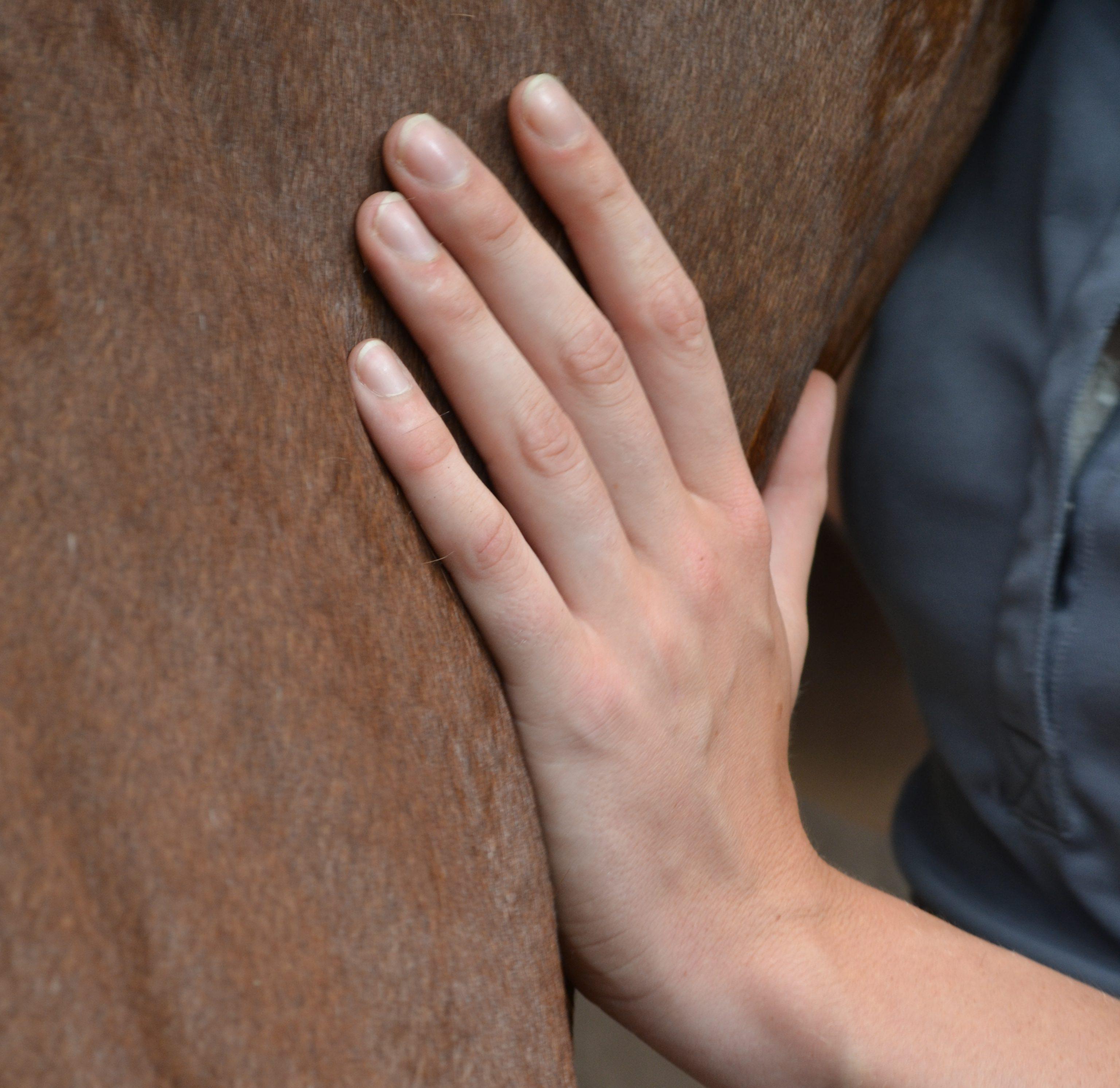 In welke gevallen mag een paard niet behandeld worden?